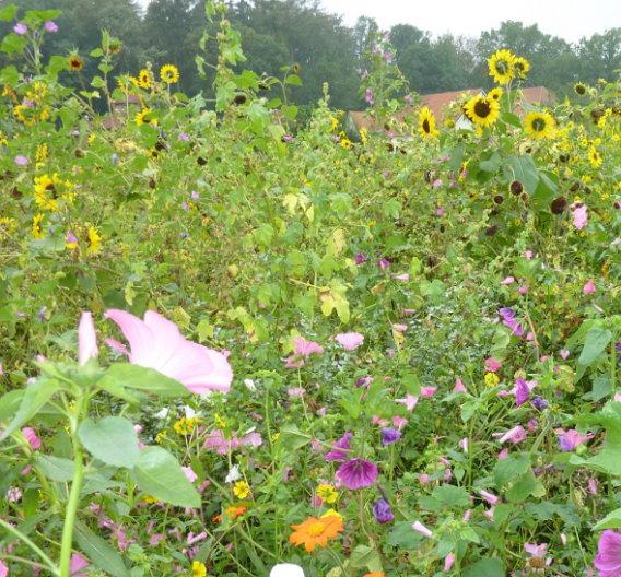 Wildpflanzen sind ökologisch klar im Vorteil: Neben ihrer Attraktivität für Wildtiere und Insekten bereichern sie die Artenvielfalt und das  Landschaftsbild. Sie benötigen keine Pflanzenschutzmittel, weniger Dünger und deutlich weniger Arbeit und damit Energieaufwand, weil sie zum Großteil aus mehrjährigen Stauden bestehen.