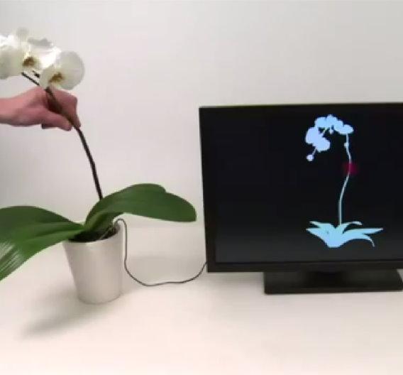 Der bekannte Unterhaltungskonzern Disney betreibt in Pittsburgh ein eigenes Forschungslabor, das sich unter anderem auch mit Multitouch-Technologien beschäftigt. Nach Erfolgen mit Flüssigkeiten und diversen Vollkörperobjekten wie Türknäufe, haben sich die Forscher jetzt den Pflanzen zugewendet.