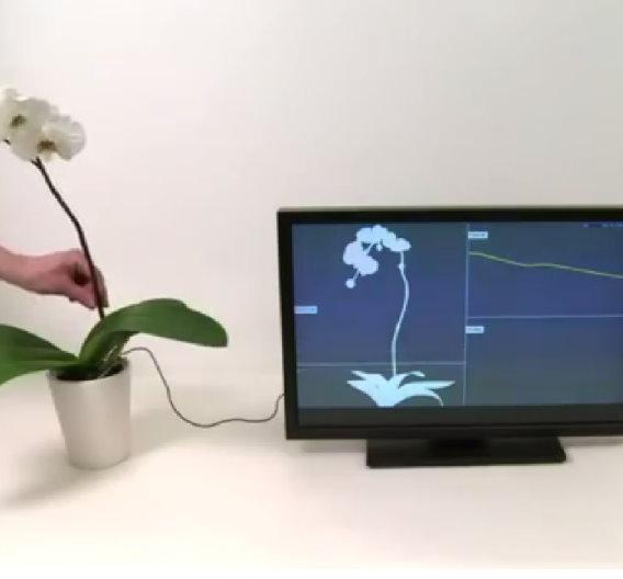 Die neue Touch-Technolgie erkennt auch Gesten, wie das Entlangstreichen am Pflanzenstengel.