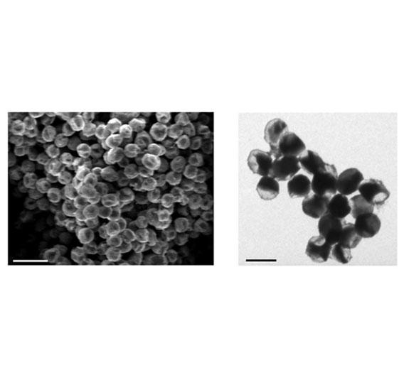 Die so entstandenen Nanopartikel unter dem Mikroskop.