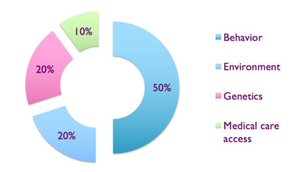 Bild 1. Relative Bedeutung der Faktoren, die die Gesundheit bestimmen. 50 % gehen auf das Konto des Verhaltens.
