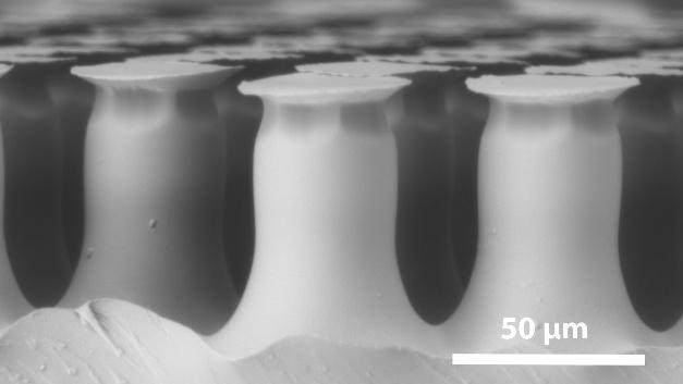 Das zweite, klebende, Material ist ein Polymer, das nach Vorbildern aus der Natur entwickelt wurde. Seine Oberfläche besteht aus einer pilzkopfförmigen Mikrostruktur, die unter dem Rasterelektronenmikroskop sichtbar wird. Sie ist starkklebenden, reversiblen Haftelementen nachempfunden, wie sie bei einigen Käferarten zu finden sind.