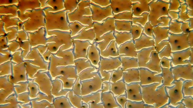 Golden Layer: Degradierte ITO-Schicht bei resistivem Touch