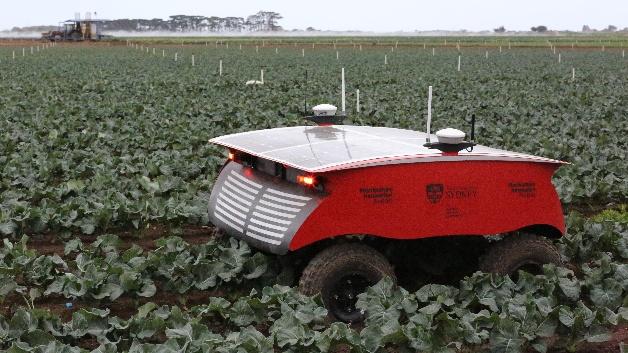 Rippa, der Roboter für intelligente Wahrnehmung und Präzisionsanwendung, ist ein Prototyp für die Gemüseanbauindustrie. Basierend auf dem Design von Ladybird haben die Forscher die Plattformkonfiguration für Rippa so modifiziert, dass sie leichter, robuster und einfacher zu bedienen ist. Auf Rippa montiert ist Viipa, ein intelligenter Präzisionsapplikator mit variabler Injektion. Damit kann der Roboter Unkräuter präzise und mit hoher Geschwindigkeit besprühen.