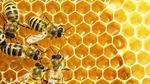 Kommt der High-Tech-Bienenstock?
