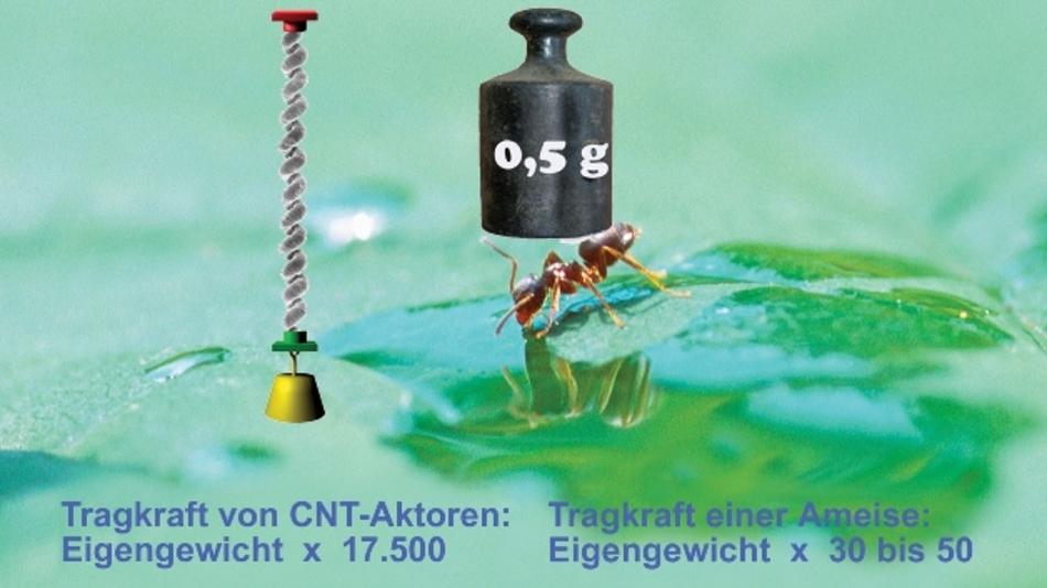 Zehn Milligramm leichte Ameisen können nur das 30- bis 50-fache ihres Eigengewichts tragen. Garnaktoren auf der Basis von Carbon-Nanotubes schaffen das 17.700-fache ihres Eigengewichts.