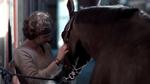 Fitnesstracking für Pferde