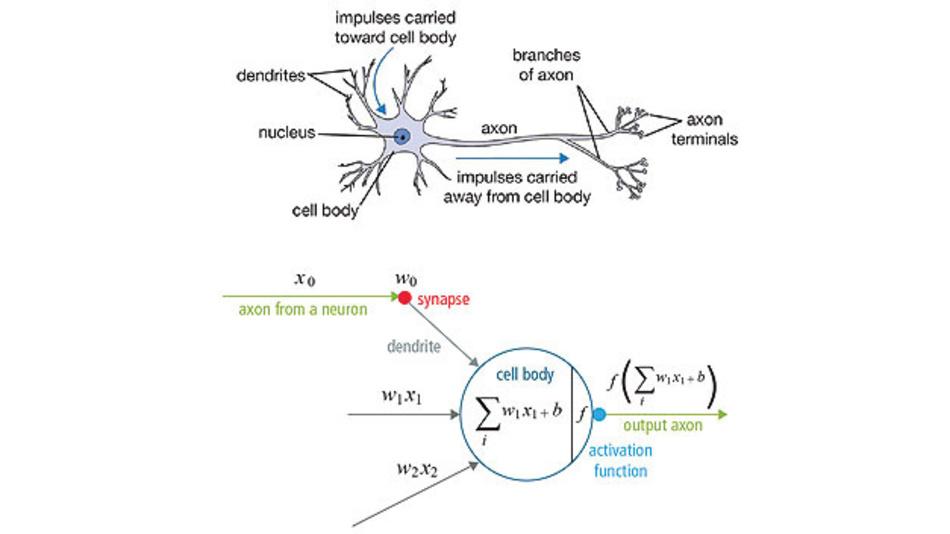 Bild 3. Neuronale Netze bilden das biologische Vorbild einer Nervenzelle (oben) durch ein mathematisches Modell (unten) nach.