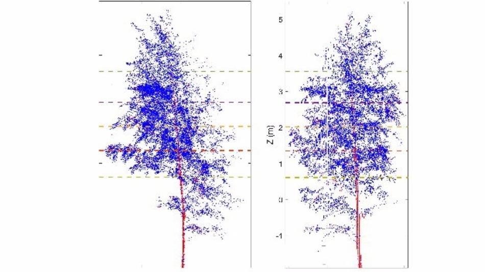 Die Studie zeigt: Auch Bäume haben einen Tag-Nacht-Rhythmus