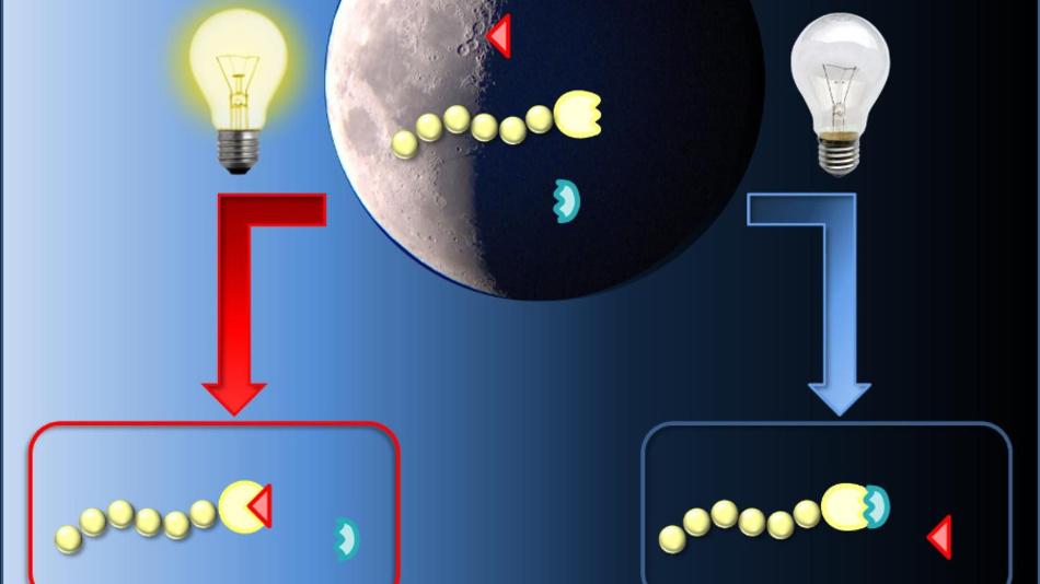 Chemische Reaktionen können mit Licht geschaltet werden.