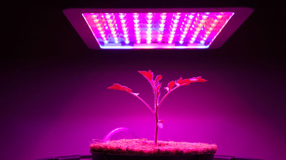Kompakte LED-Leuchten bringen die Photosynthese von Nutzpflanzen in Gang.