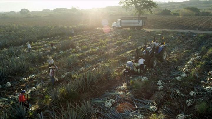 Ford kooperiert zukünftig mit Tequila-Hersteller Jose Cuervo. Grund: Bei der Tequila-Produktion fallen Agavenfasern ab, die sich für den Einsatz im Fahrzeuginnenraum oder für Kabelbäume nutzen lassen.