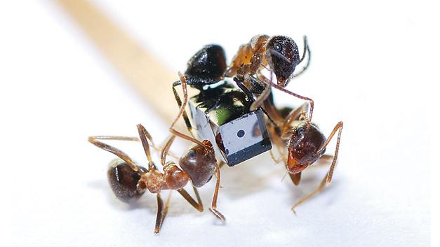 Bild 2. Das NanEye ist ein Kamerakopf für endoskopische Untersuchungen mit nur 1 × 1 × 1,6 mm3 Größe.
