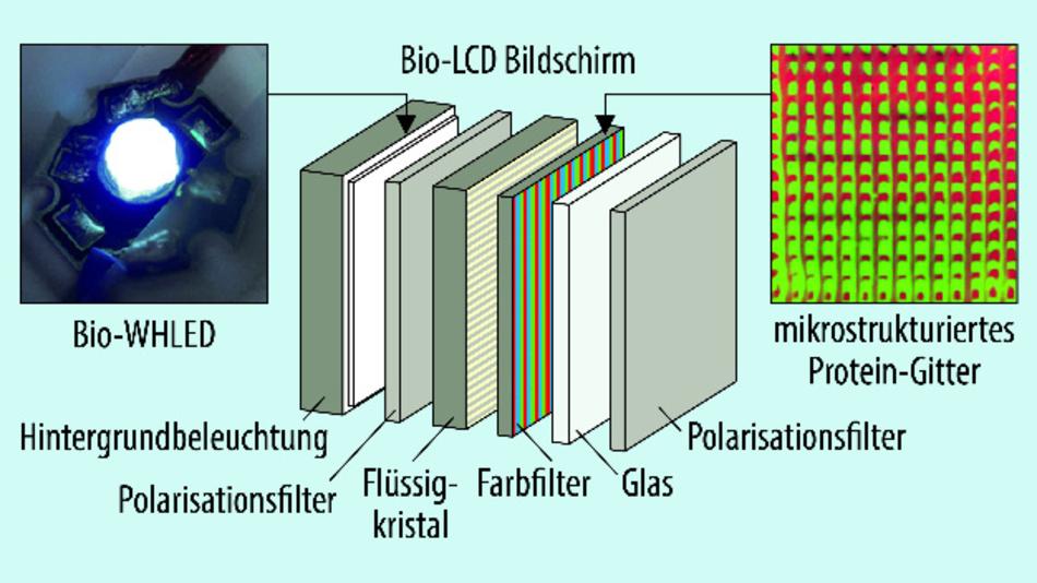 erste schritte zum bio display led hinterleuchtung und farbfilter aus proteinen seite 3. Black Bedroom Furniture Sets. Home Design Ideas