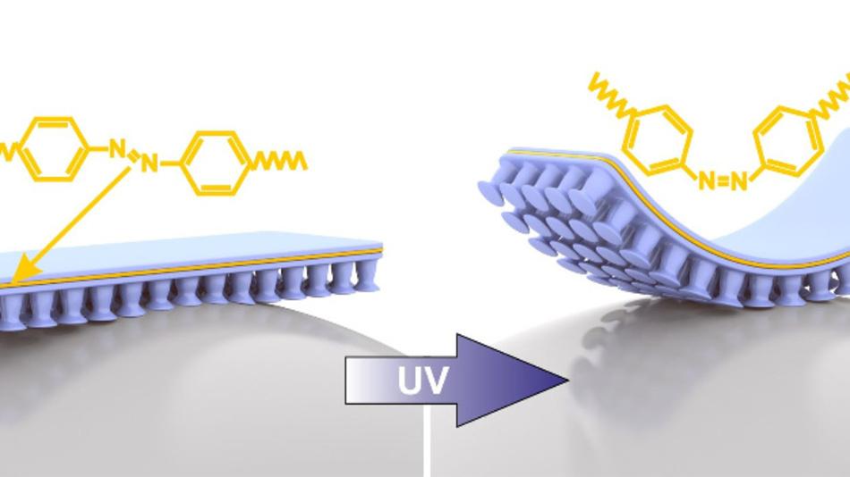 Das neue Kompositmaterial besteht aus zwei Stoffen: Einem klebenden Material (blau) und einem elastischen Kunststoff LCE (Liquid crystal elastomer) (gelb). LCE ist aus Azobenzolmolekülen aufgebaut, die sich – und damit das ganze Material – biegen, sobald sie mit UV-Licht bestrahlt werden. Durch das Biegen lösen sich die Haftelemente wieder vom Objekt.