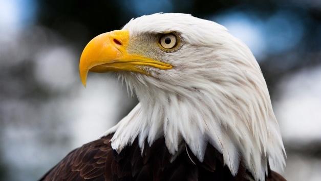 3D-gedruckte Sensoren bilden das Auge des Adlers nach