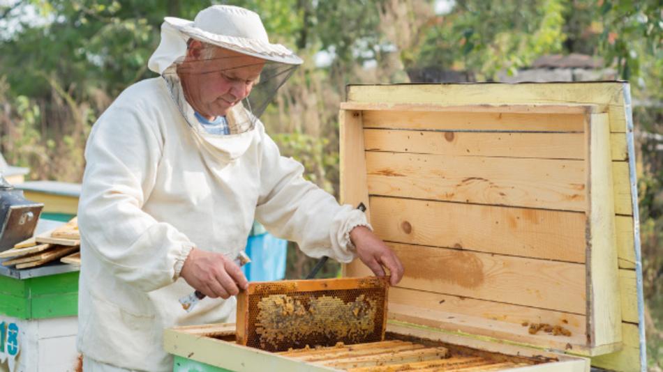 Allein in Deutschland ist nach Angaben des Deutschen Imkerbundes die Zahl der Bienenvölker seit 1952 von 2,5 Millionen auf heute weniger als eine Million zurückgegangen.