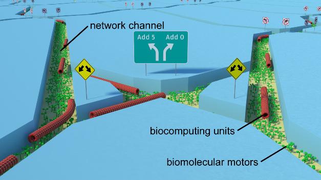 Schema von Bioinformatik-Einheiten, die mit Hilfe von molekularen Motoren durch eine Kreuzung inmitten eines Kanal-Netzwerkes geführt werden.