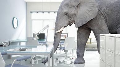Elefant im Büro