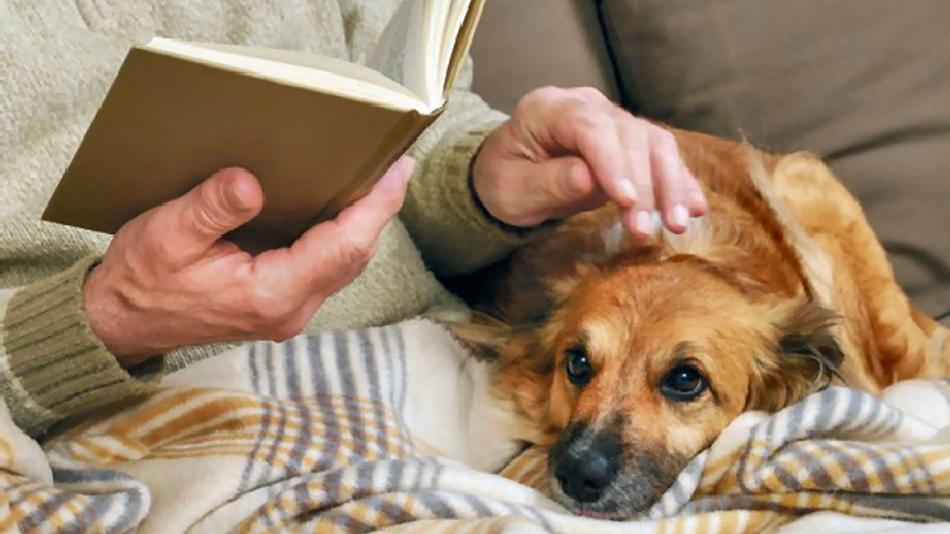 Vertraute Umgebungen sind für alte Menschen und ihre Haustiere gleichermaßen sehr wichtig