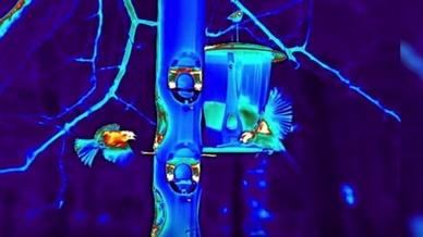Faszinierende High-speed-Wärmebildaufnahmen mit den IR-Kameras von Flir