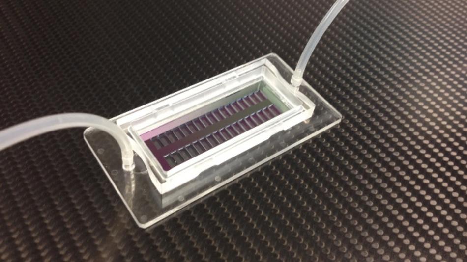 Der neue Mikrolochchip kann 200 000 einzelne Zellen an einer exakten Position fixieren.