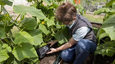 Latentwärmespeicher im Pflanzenanbau