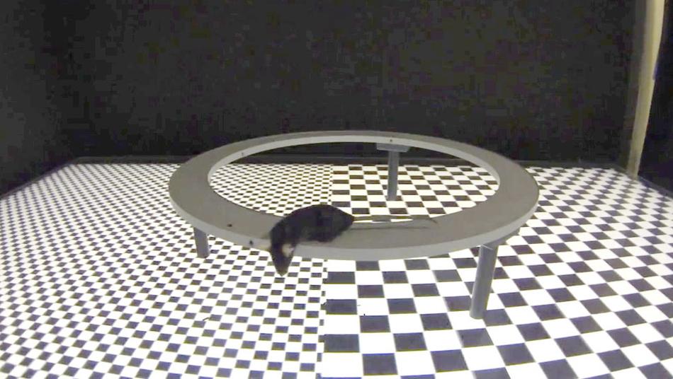 vr in der forschung holodeck f r tiere seite 2 elektronik. Black Bedroom Furniture Sets. Home Design Ideas