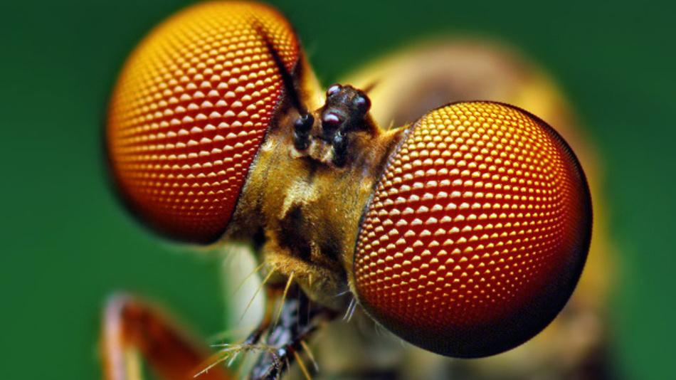Das Facettenauge der Fliege inspirierte Stanford-Forscher dazu, eine zusammengesetzte Solarzelle zu schaffen, die aus Perowskit-Mikrozellen besteht, die in einem sechseckigen Gerüst eingekapselt sind.