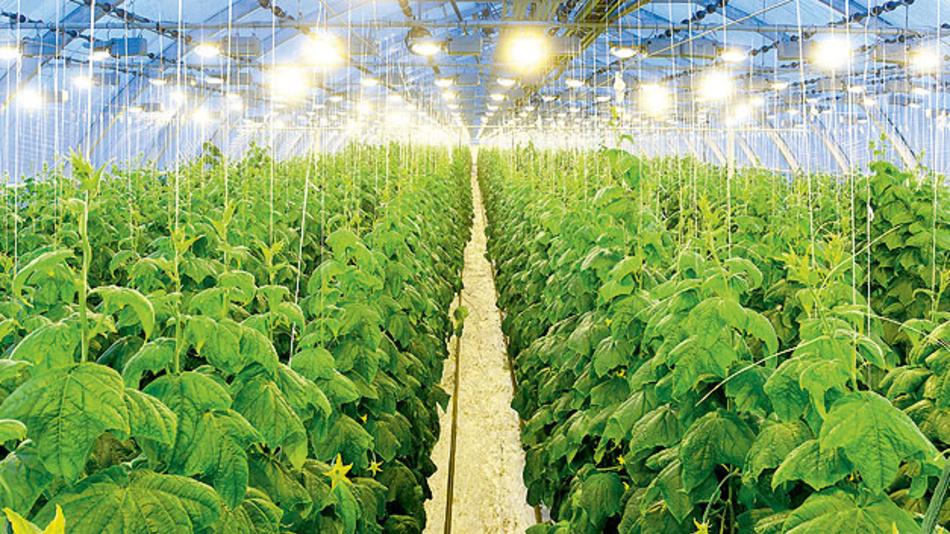 Gemüseanbau ist ein Hightech-Geschäft.