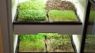 Smart Gardening für zuhause - das Startup Agrilution hat gemeinsam mit Osram eine individuelle Lichtlösung für den Anbau frischen Grüns im eigenen Haus entwickelt. Hier dürfte die Zukunft des Kräuteranbaus liegen...