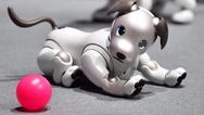 Roboterhund Aibo ERS-1000