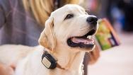 Smart-Service V-Pet für Tiere