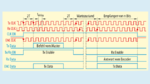 Bild 5. EnDat-Übertragungs-/Empfangs-Sequenz.