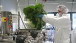 Industrie 4.0 für ... Pflanzen?