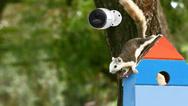 Überwachungskamera Reolink Go