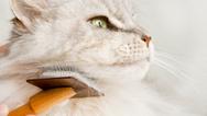 Katzenfellpflege