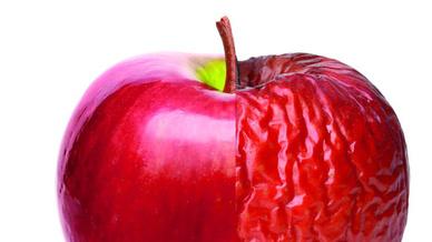 Apfel frisch vs. faul