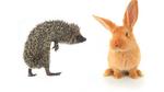 Ein Hase-und-Igel-Spiel