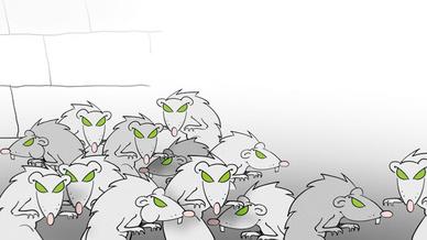 Rattengruppe