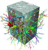Rekonstruktion von Nervenzellen aus einem Elektronenmikroskopie-Datensatz mit Hilfe der flood-filling networks (FFN).