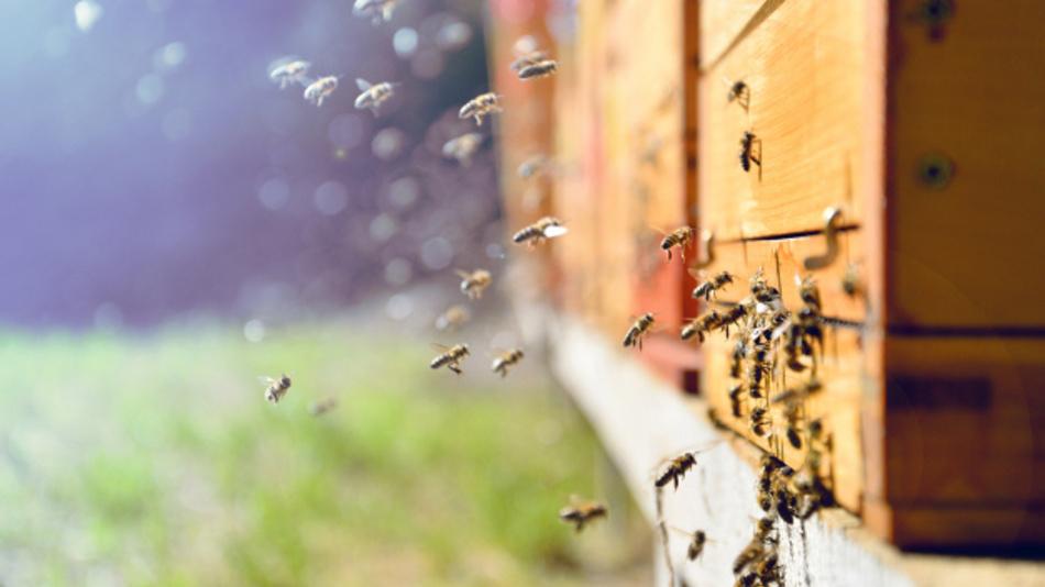 Was ist los im Bienenstock? HoneyPi hilft Imkern dabei ihre Bienenvölker zu überwachen.