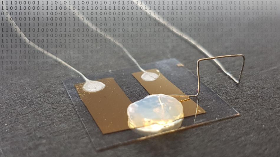 Die Grenze der Miniaturisierung erreicht der Einzelatom-Transistor, der in einem Gel-Elektrolyten funktioniert.