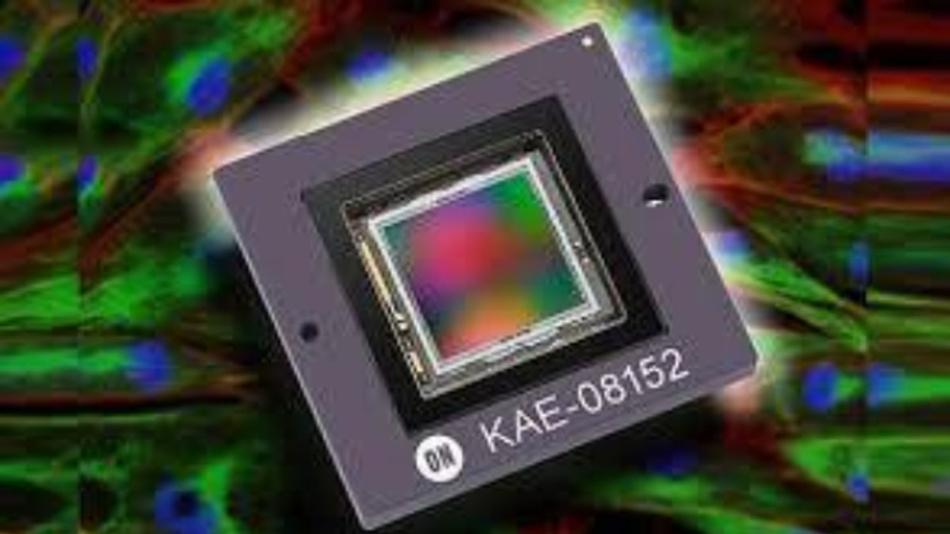 Bildsensor KAE-08152 eine hohe Quanteneffizienz im NIR-Bereich.