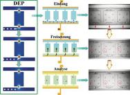 Auf Mikrofluidtechnik basierender Chip für die Manipulation und anschließende Nukleinsäure-Analytik einzelner Zellen.