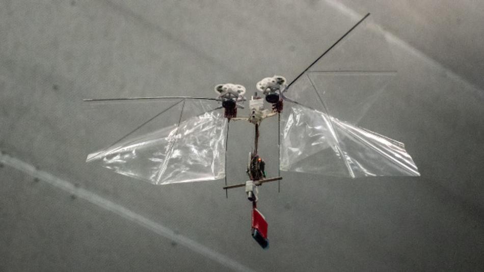 Nicht wie ein Hubschrauber, sondern mit schlagenden Flügeln können sie autonomen Flugroboter vom Typ »DelFly Nimble« komplexe Flugmanöver nach Insektenvorbild durchführen.  Drohnen auf Basis dieser Technik rücken nun in den Bereich des Machbaren – auch preislich.