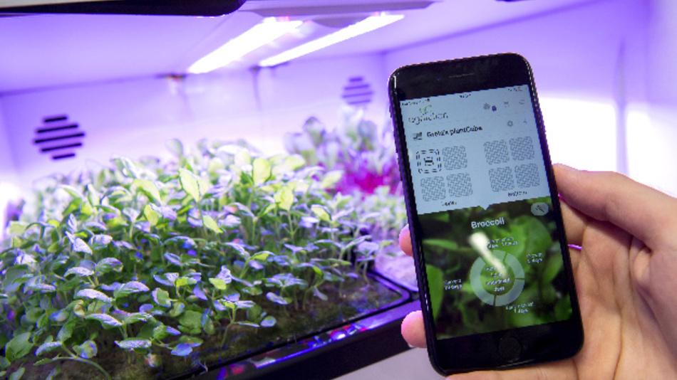 Pflanzenanbau im Regallager bei reiner Kunstbeleuchtung: Vertical Farming ist für die Lichtkonzerne ein kommender Milliarden-Markt.