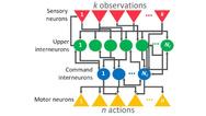 Architektur neuronales Netz