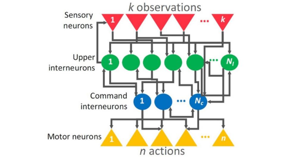 Unterschiedliche Schichten von Neuronen sind in einem neuronalen Netz übereinander gelagert und beeinflussen einander.