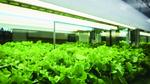 Licht-Industrie setzt auf Horticulture